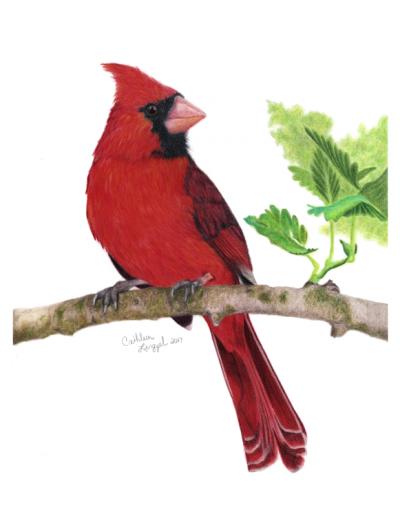 Scarlet Messenger