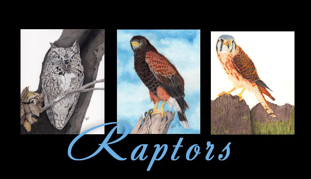 Colors-Raptors